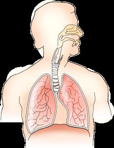 pulmonolog siedlce